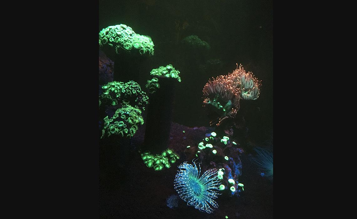 Le corail au cœur de la vie et de l'Aquarium de Paris