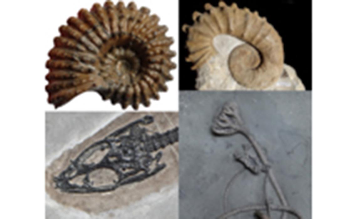 Quand les fossiles débarquent à Sainte-Marie-aux-Mines!